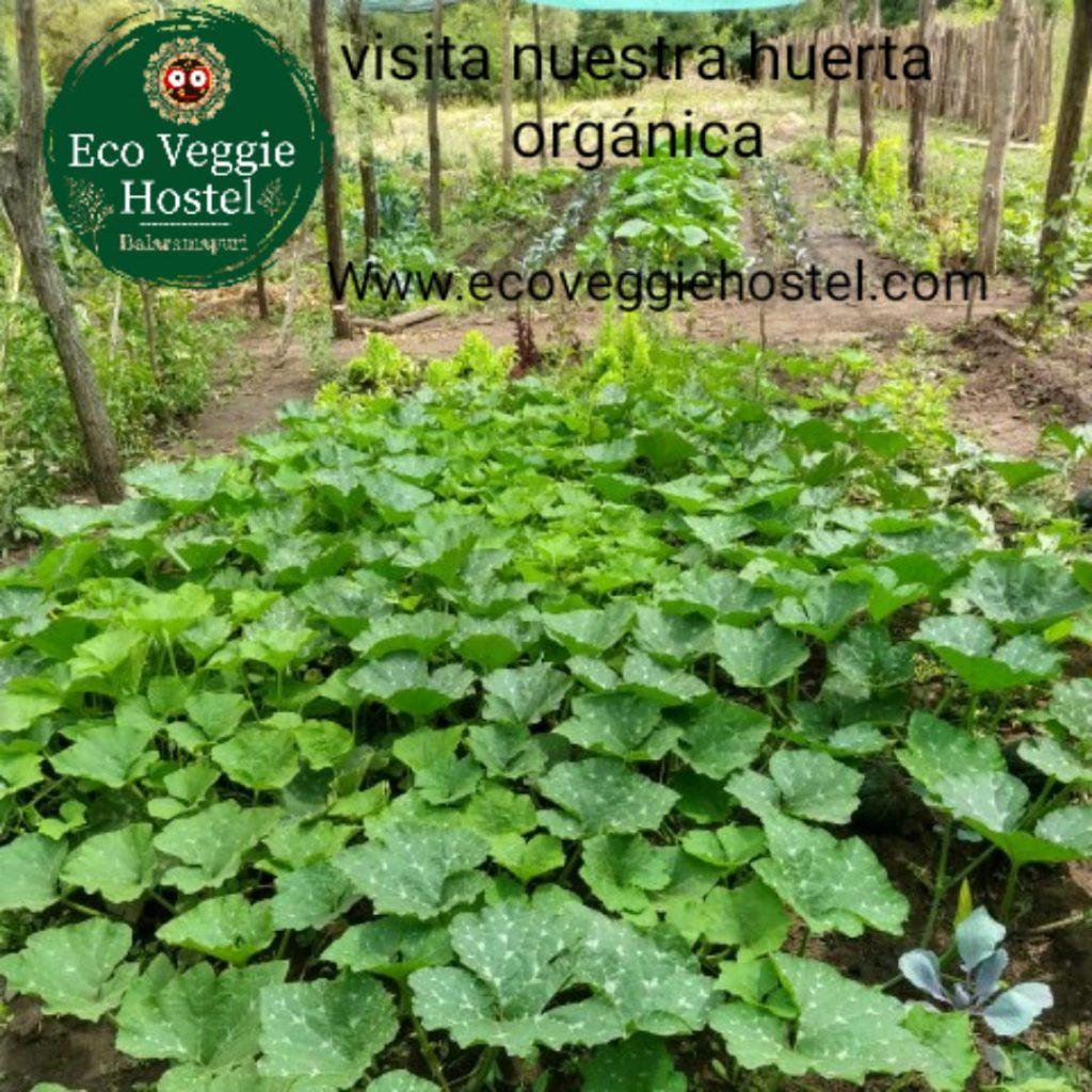 WhatsApp Image 2020 01 09 at 22.03.11 1024x1024 - Huerta Eco Veggie