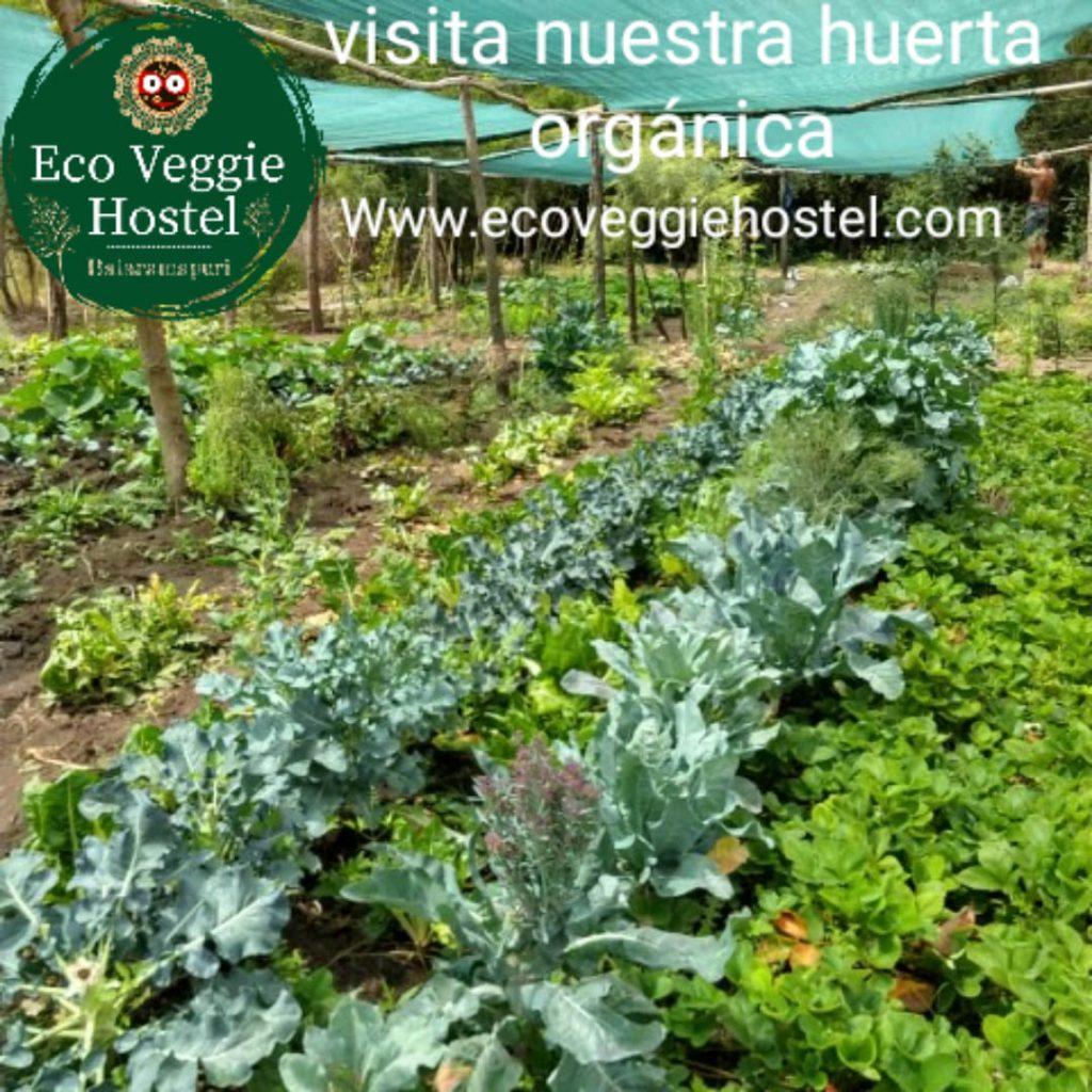 WhatsApp Image 2020 01 09 at 22.03.17 1024x1024 - Huerta Eco Veggie