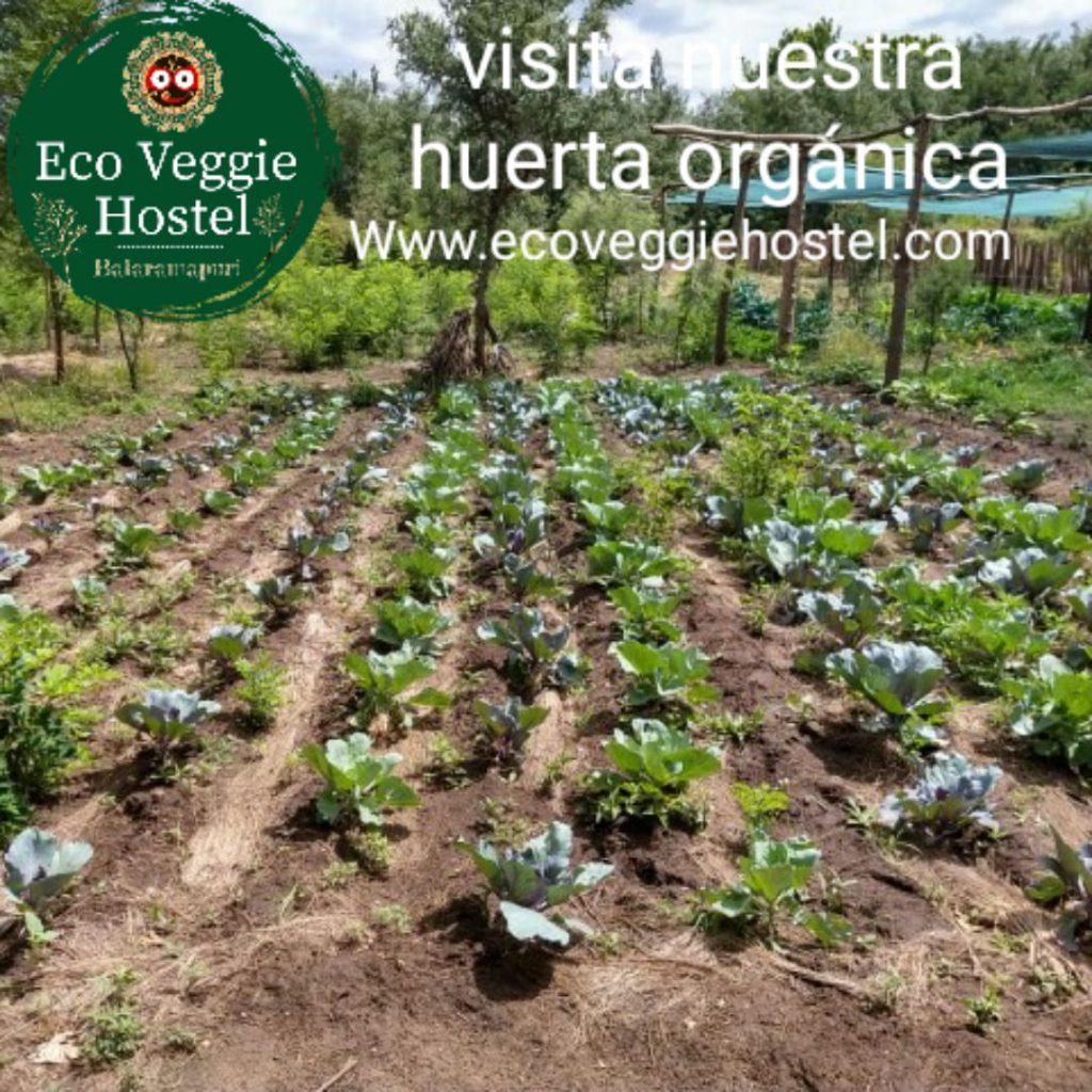 WhatsApp Image 2020 01 09 at 22.03.18 1024x1024 - Huerta Eco Veggie