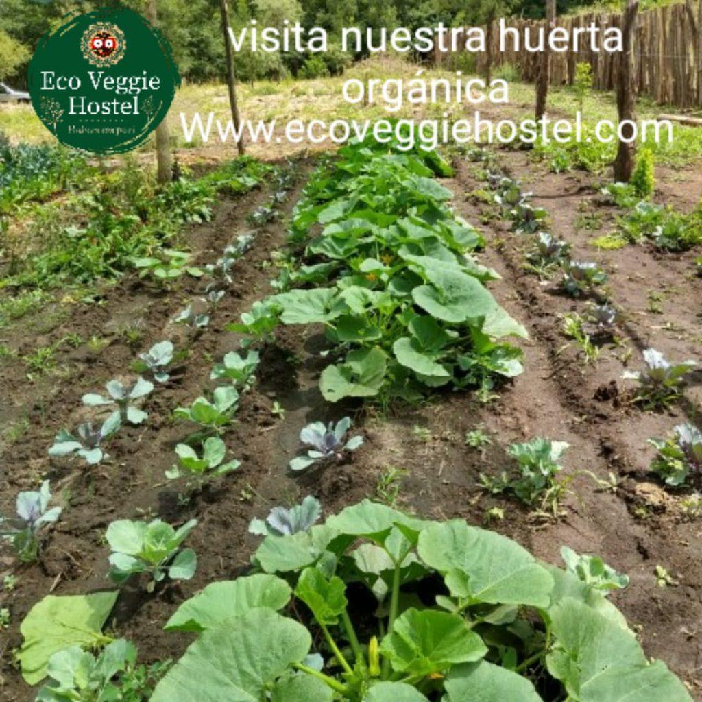 WhatsApp Image 2020 01 09 at 22.03.19 1024x1024 - Huerta Eco Veggie
