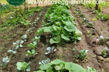 Menúes Eco veggie