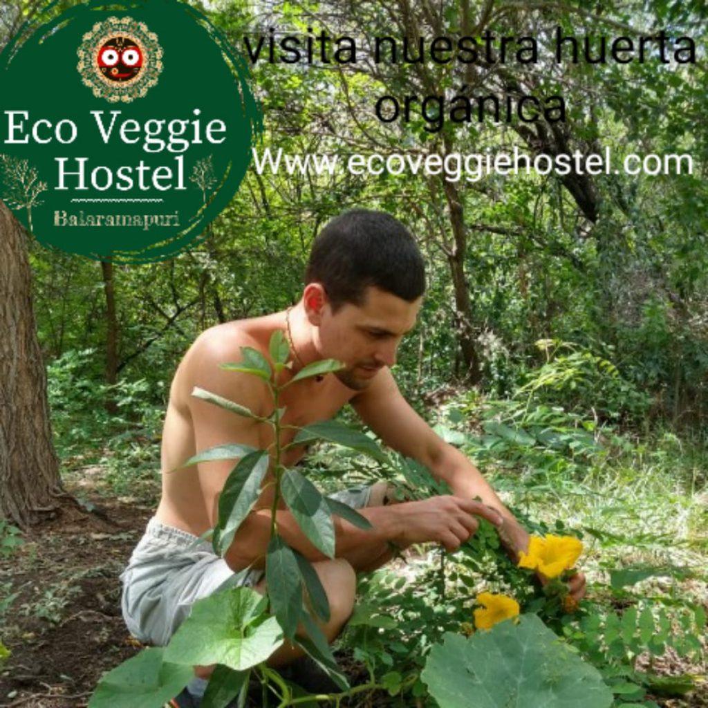 WhatsApp Image 2020 01 09 at 22.03.21 1024x1024 - Huerta Eco Veggie