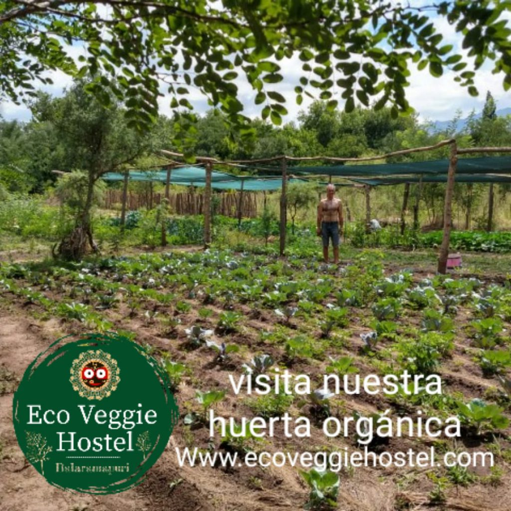 WhatsApp Image 2020 01 09 at 22.03.22 1024x1024 - Huerta Eco Veggie