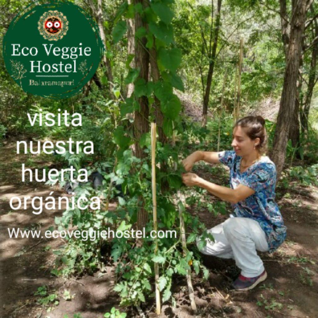 WhatsApp Image 2020 01 09 at 22.03.23 1 1024x1024 - Huerta Eco Veggie