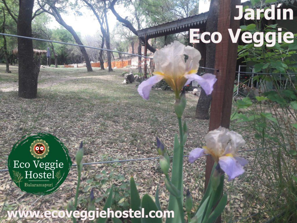 jardin eco veggie 2 1024x768 - Huerta Eco Veggie